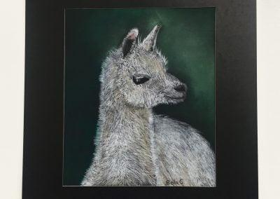 Bella - Llama (Age 11)