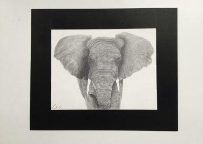 Olivia. O - African Elephant (Age 11)